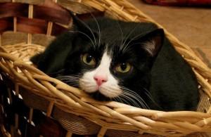 El gato pasa largas horas lamiéndose y acicalándose.