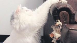 Es imprescindible enseñarle a usar los rascadores que puedes comprar en las veterinarias.