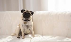 Aprende a quitar el olor a can de tu hogar de una vez por todas.